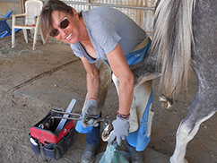 Farrier services and horse health maintenance